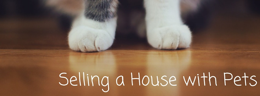 Selling a House With Pets | Seller Advice | Jessie Singh